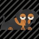 animal, cute, dachshund, dog, friendly