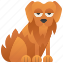 dog, friendly, golden, pet, retriever
