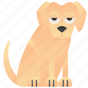 animal, cute, dog, labrador, puppy icon