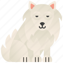 cute, dog, friendly, puppy, samoyed