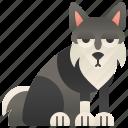 domestic, husky, pet, purebred, siberian icon