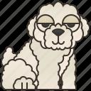 bichon, cute, frise, furry, puppy icon