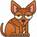 adorable, animal, chihuahua, dog, puppy icon