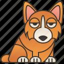 cute, corgi, small, dog, funny