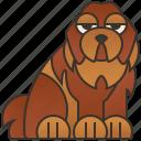 newfoundland, dog, pet, purebred, canine