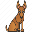 canine, dog, hound, pedigree, pharaoh