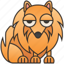cute, dog, small, furry, pomeranian