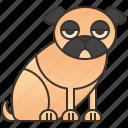 animal, dog, funny, pug, puppy icon