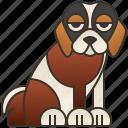bernard, canine, friendly, large, saint icon