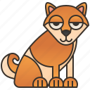 dog, domestic, japanese, purebred, shiba icon