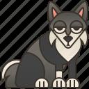 domestic, husky, pet, purebred, siberian