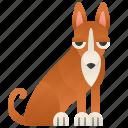 basenji, brown, dog, pedigree, small