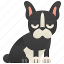 boston, cheerful, pet, small, terrier icon