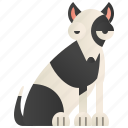breed, bull, playful, small, terrier