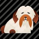 cute, dog, havanese, purebred, small icon