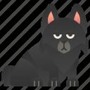 belgium, breed, dog, schipperke