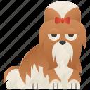 dog, playful, shih, toy, tzu icon