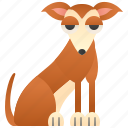breed, brown, hound, small, whippet