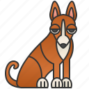 basenji, brown, dog, pedigree, small