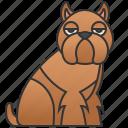 breed, brussles, cheerful, dog, griffon icon