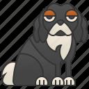 british, cavalier, dog, gentle, spaniel