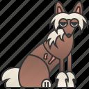 chinese, crested, dog, hairdo, pet icon