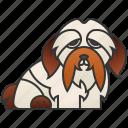 cute, dog, havanese, purebred, small