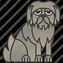 canine, grey, irish, tall, wolfhound icon