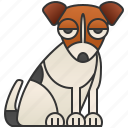 canine, jack, purebred, russell, terrier icon