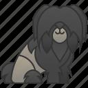 dog, lion, lowchen, small icon