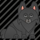 belgium, breed, dog, schipperke icon