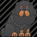 canine, ferocious, giant, mastiff, tibetan icon