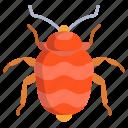 bed, bug