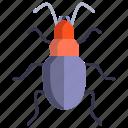 ground, beetle