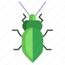 stink, bug