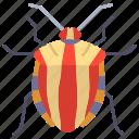 striped, shield, bug