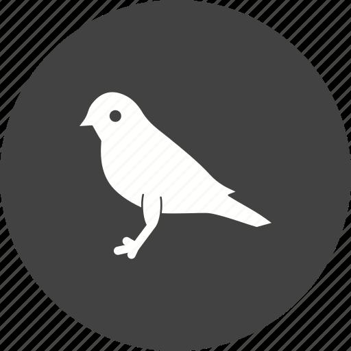 autumn, beak, bird, branch, natural, songbird, sound icon