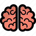 brain, head, human brain, mind, sense icon