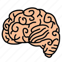 biology, brain, business, think, thought
