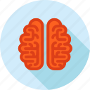 brain, brainstorming, education, flat deisgn, idea, innovation, long shadow icon