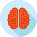 brain, education, flat design, knowledge, learning, long shadow, thinking icon