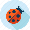 animal, beetle, bug, flat design, insect, ladybug, nature icon