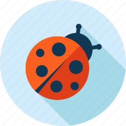 animal, beetle, bug, flat design, insect, ladybug, nature icon