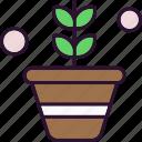 flower, leaf, plant, pot
