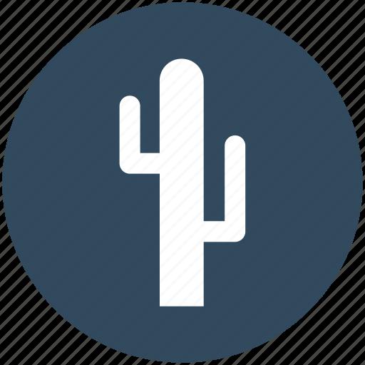 arid, cactaceae, cactus, desert plant, wild plant icon