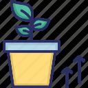 dollar, earning, growth needs, money plant, profit