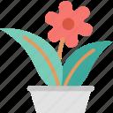 flowerpot, decoration, flower, greenery, nature, pot, pretty icon
