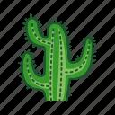 arizona, cacti, cactus, dry, plant, tropical, wild icon
