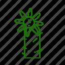 cactus, deserts, nature, plant, pot, thorns icon