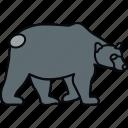 animal, bear, wild, animals, forest, nature